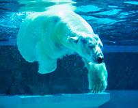 The Mighty Polar Bear