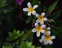Sesión Fotográfica en el Jardín de las Rosas