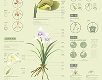 国兰Chinese national orchid diagram