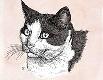 Pet Portrait - Phoebe