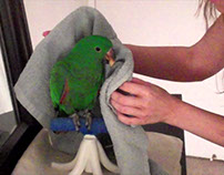 Towel Training a Parrot