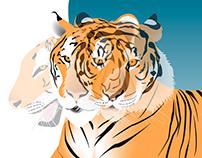Tigre (Panthera tigris tigris)