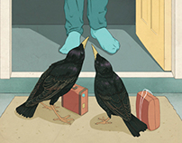 Starlings for The Globe and Mail