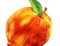 Food & Beverage Watercolor