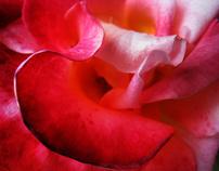 objects: florae macro