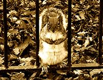 Behind bars squirrel