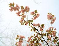 Spring in New York City 2013