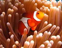 Brand identity redesign: Newport Aquarium