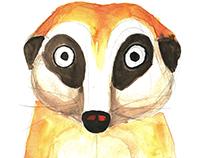 Character Design - Meerkat