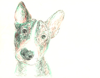 Portraits of Ozzy the bullterrier