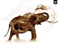 kzgn elephant