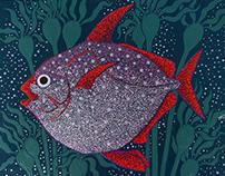 Opah, the moonfish
