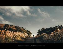 秋芒 -Miscanthus