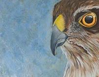 Birds - Paintings