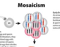 Graphic illustrations for genetics