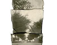 Polaroid Transfers