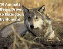 10 Animals Being Driven to Extinction by Humans