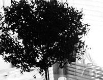 Bob the Tree