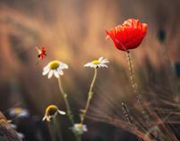 ladybird traveler