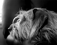Natural light dog photography