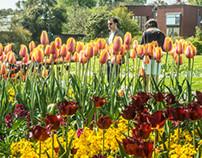 The Botanic Gardens In Dublin (Ireland)
