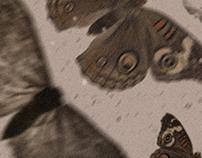 Queen of Moths