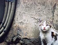 kittensVsandroids
