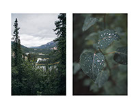 Macro & Micro: Alaska