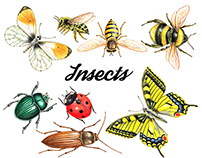 Watercolor insects. Use them in different design