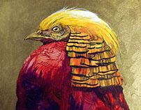 color artwork_bird