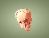 Skull Le Fort