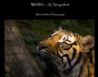 Wildlife - A Snapshot