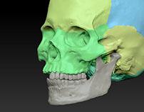 WIP Skull