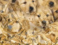 Gold Yella