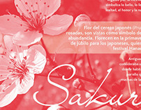 Flyer - Sakura, Cherry Tree's Flower