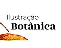 Ilustração botânica   Cerrado