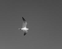 Flying -DEDICATED-