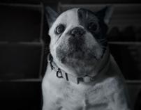 Dog | AT&T DIGITAL LIFE