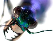 Emerald Beetle
