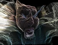Digital Scream