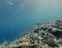 Sergiology - Huvafen Fushi , Maldives