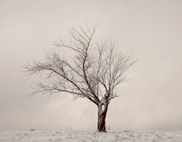 Winter Scapes