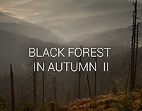Photography - Black forest in autumn II