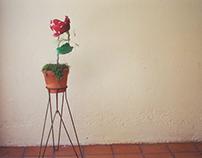 Sculpture: Photo Flower