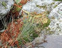 colores de otoño (2)  ·  autumn colors (2)