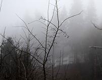 Fog Study