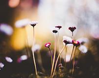 Macro In The Garden