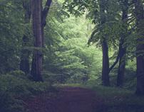 Padborg forest