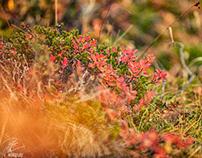 Þingvellir in autumn - Iceland 2020
