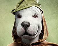 SERASA | DOGS